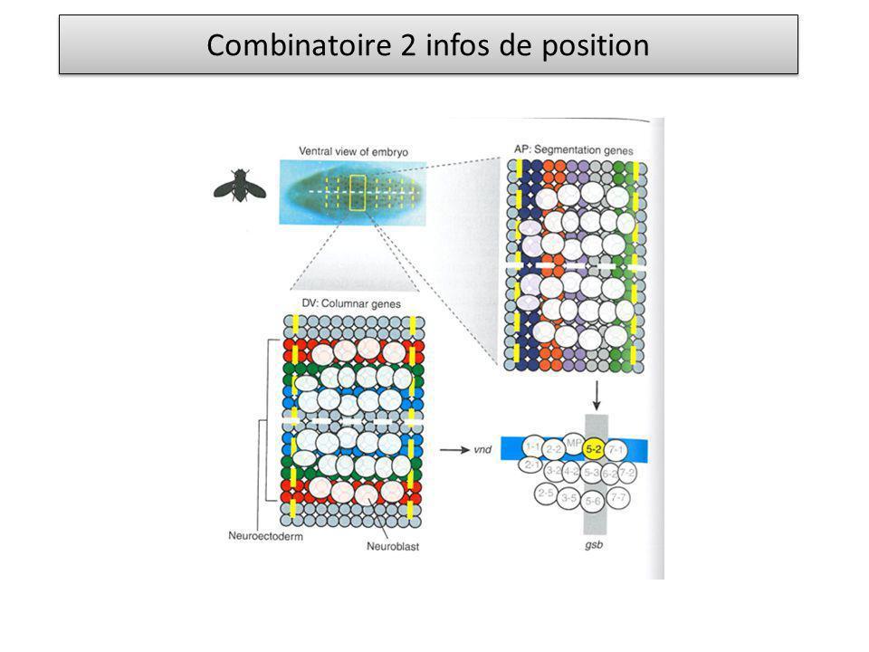 Combinatoire 2 infos de position