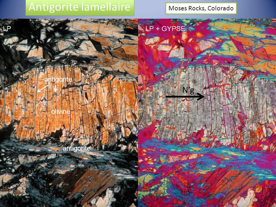 Ng Antigorite lamellaire Moses Rocks, Colorado LP + GYPSELP olivine antigorite
