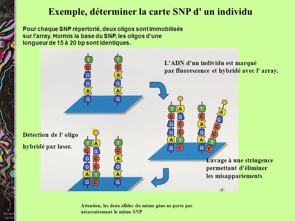 Les polymorphismes génétiques influencent la pharmacocinétique (absorption, distribution, métabolisme, excrétion).