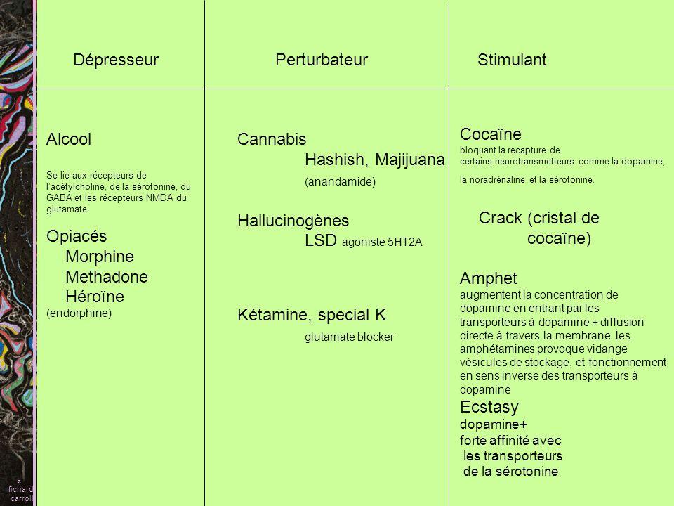 Schizophrénies A) Symptômes B) Evolution pronostic C) Début de la maladie D) Enfance adolescence E) Génétique F) Données neuro-anatomiques G) Neurochimie hypothèse dopaminergique hypothèse glutamatergique H) Théorie I)Traitement a fichard carroll