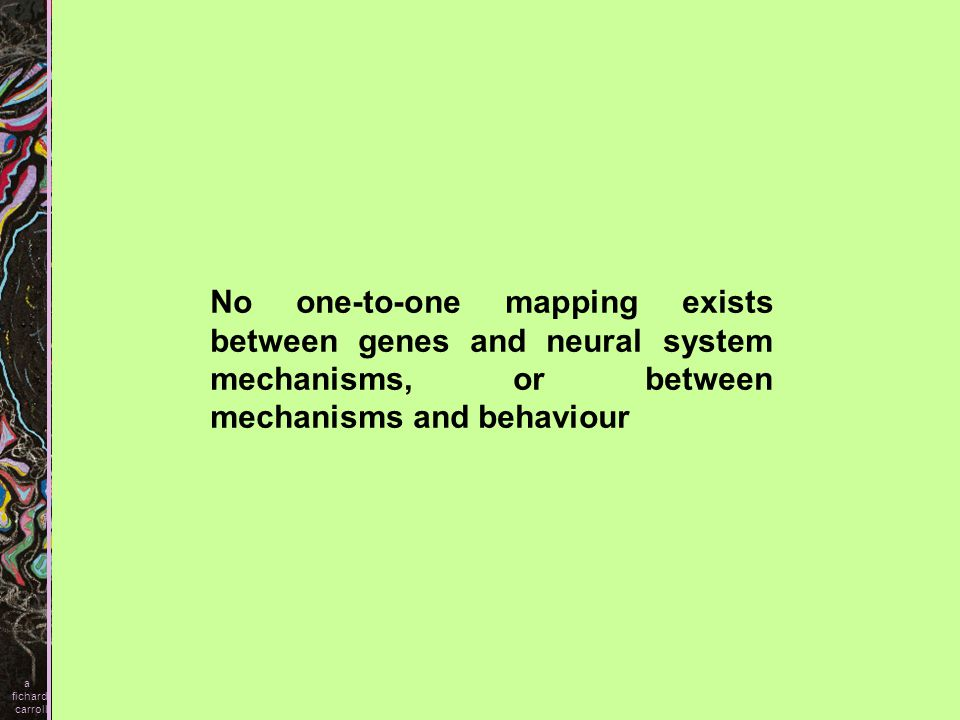 No one-to-one mapping exists between genes and neural system mechanisms, or between mechanisms and behaviour a fichard carroll