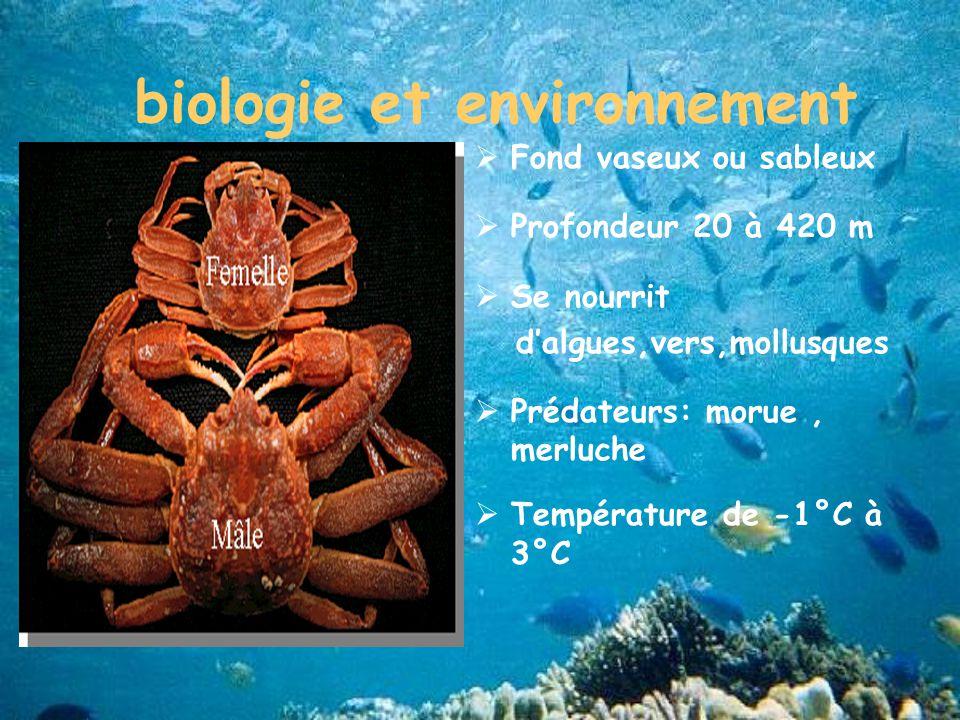 biologie et environnement Fond vaseux ou sableux Profondeur 20 à 420 m Se nourrit dalgues,vers,mollusques Prédateurs: morue, merluche Température de -1°C à 3°C