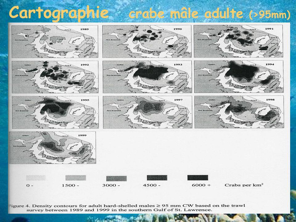 Cartographie crabe mâle adulte (>95mm)