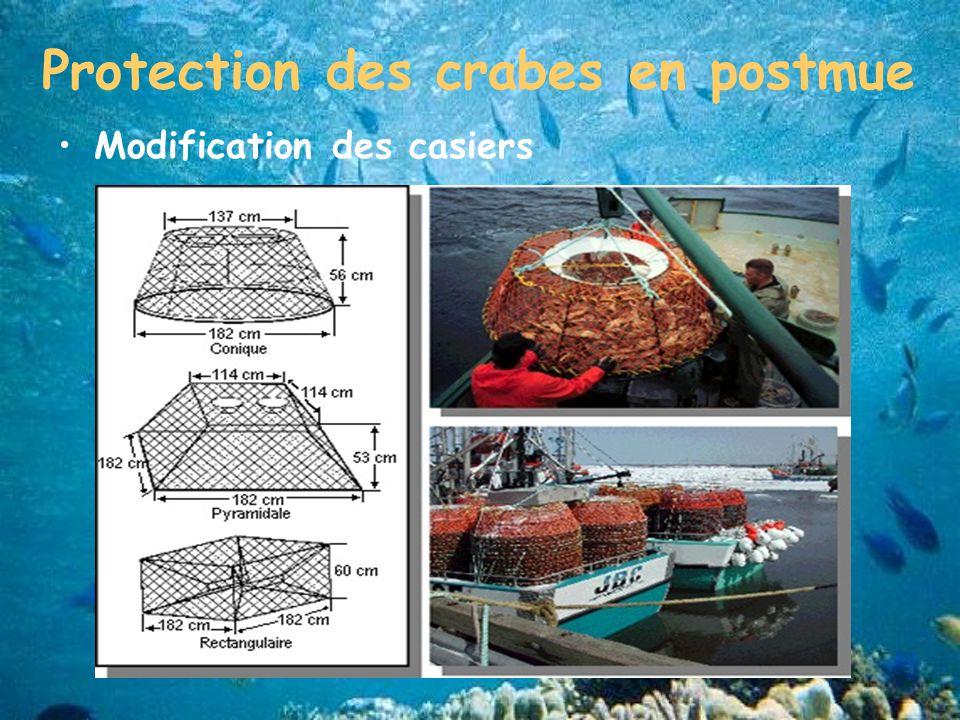 Protection des crabes en postmue Modification des casiers