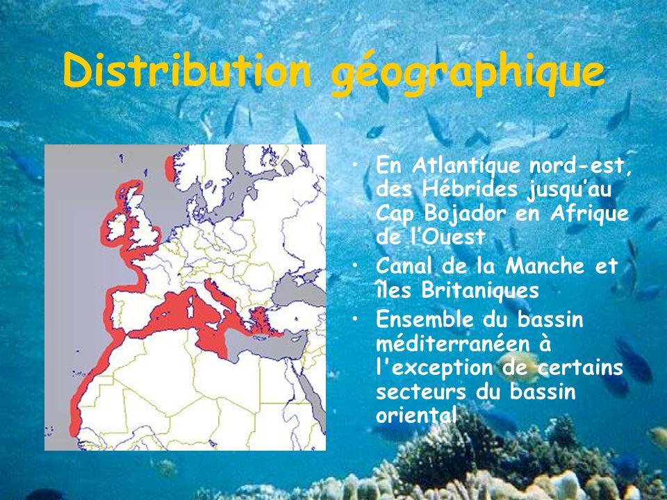 Distribution géographique En Atlantique nord-est, des Hébrides jusquau Cap Bojador en Afrique de lOuest Canal de la Manche et îles Britaniques Ensemble du bassin méditerranéen à l exception de certains secteurs du bassin oriental
