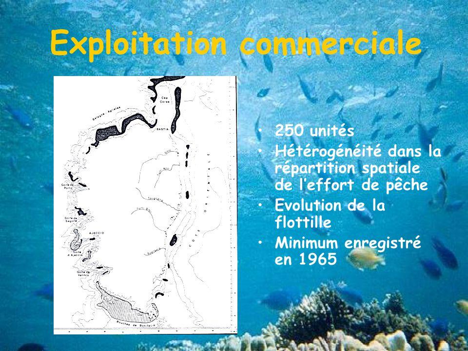 250 unités Hétérogénéité dans la répartition spatiale de leffort de pêche Evolution de la flottille Minimum enregistré en 1965 Exploitation commerciale