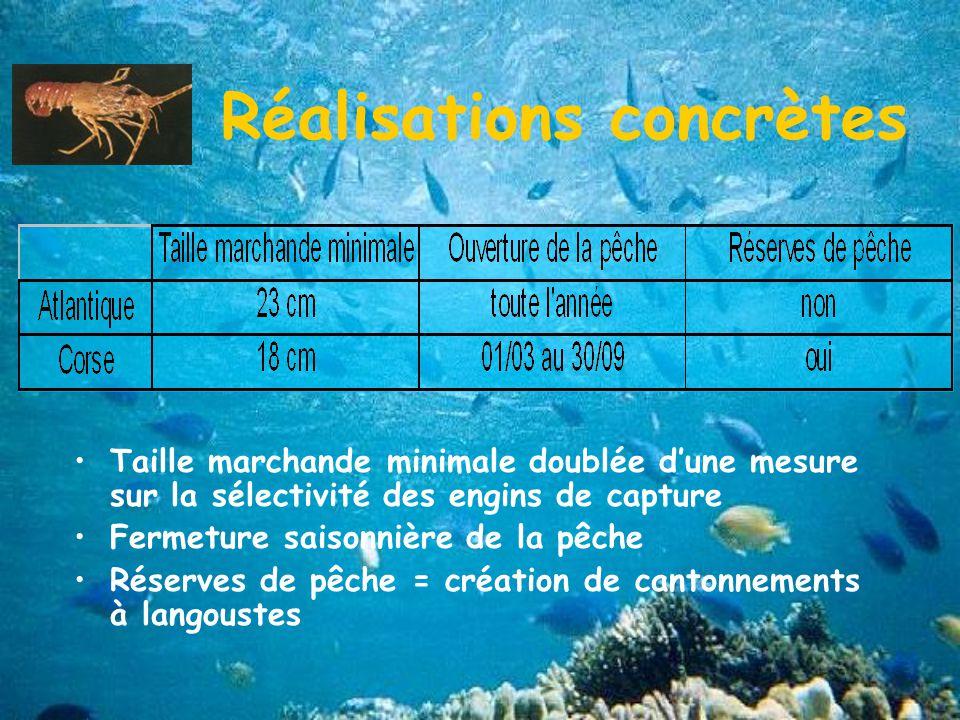 Réalisations concrètes Taille marchande minimale doublée dune mesure sur la sélectivité des engins de capture Fermeture saisonnière de la pêche Réserves de pêche = création de cantonnements à langoustes