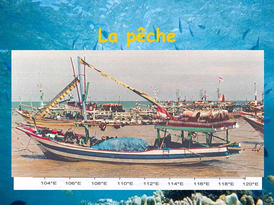 La pêche 2 catégories de pêches Pêche artisanale : mini senneurs Pêche industrielle: moyens et grands senneurs Evolution de la zone de pêche
