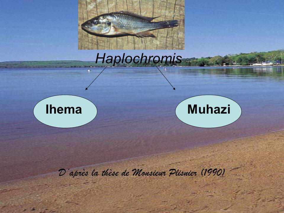 Haplochromis Ihema Muhazi Daprès la thèse de Monsieur Plisnier (1990)