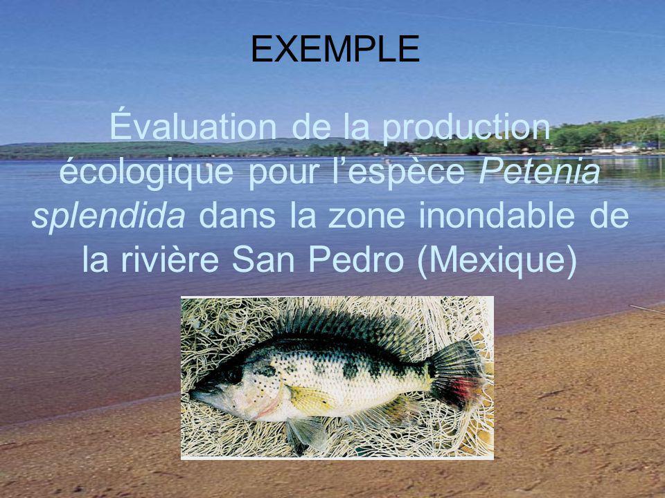 Évaluation de la production écologique pour lespèce Petenia splendida dans la zone inondable de la rivière San Pedro (Mexique) EXEMPLE