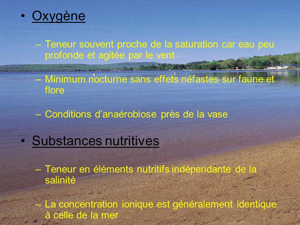 Oxygène –Teneur souvent proche de la saturation car eau peu profonde et agitée par le vent –Minimum nocturne sans effets néfastes sur faune et flore –