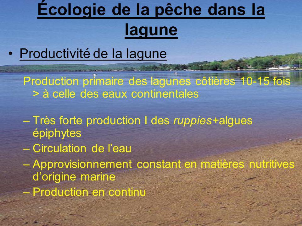 Écologie de la pêche dans la lagune Productivité de la lagune Production primaire des lagunes côtières 10-15 fois > à celle des eaux continentales –Très forte production I des ruppies+algues épiphytes –Circulation de leau –Approvisionnement constant en matières nutritives dorigine marine –Production en continu
