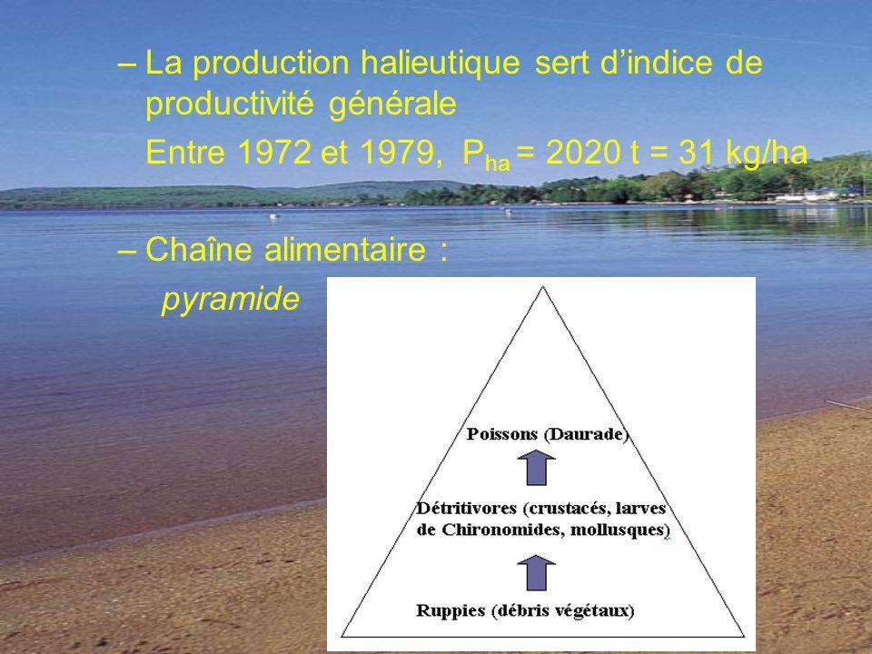 –La production halieutique sert dindice de productivité générale Entre 1972 et 1979, P ha = 2020 t = 31 kg/ha –Chaîne alimentaire : pyramide