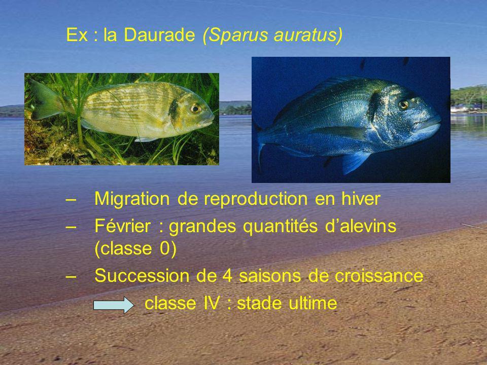 Ex : la Daurade (Sparus auratus) –Migration de reproduction en hiver –Février : grandes quantités dalevins (classe 0) –Succession de 4 saisons de croissance classe IV : stade ultime