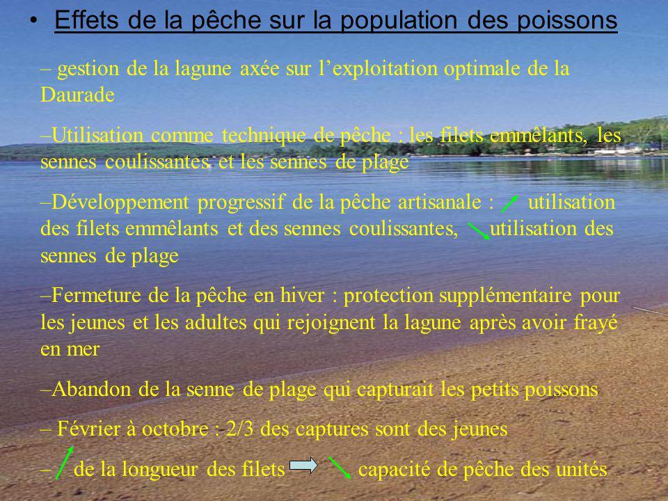 Effets de la pêche sur la population des poissons – gestion de la lagune axée sur lexploitation optimale de la Daurade –Utilisation comme technique de pêche : les filets emmêlants, les sennes coulissantes et les sennes de plage –Développement progressif de la pêche artisanale : utilisation des filets emmêlants et des sennes coulissantes, utilisation des sennes de plage –Fermeture de la pêche en hiver : protection supplémentaire pour les jeunes et les adultes qui rejoignent la lagune après avoir frayé en mer –Abandon de la senne de plage qui capturait les petits poissons – Février à octobre : 2/3 des captures sont des jeunes – de la longueur des filets capacité de pêche des unités