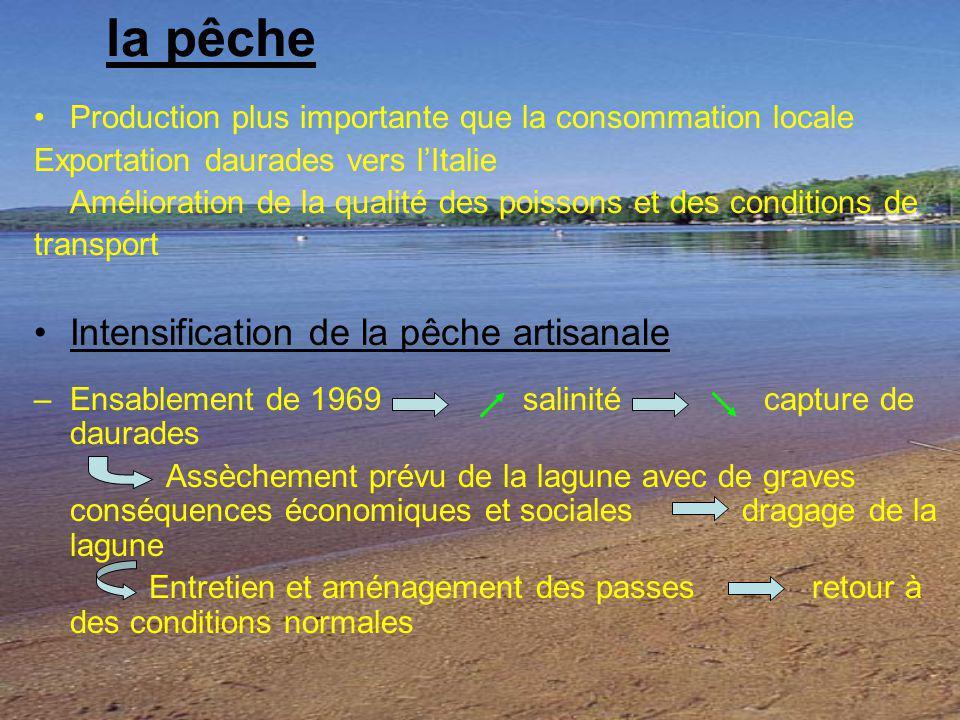 la pêche Production plus importante que la consommation locale Exportation daurades vers lItalie Amélioration de la qualité des poissons et des condit