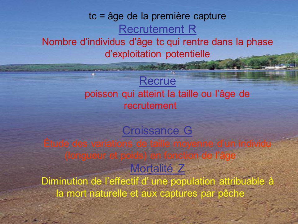 tc = âge de la première capture Recrutement R Nombre dindividus dâge tc qui rentre dans la phase dexploitation potentielle Recrue poisson qui atteint