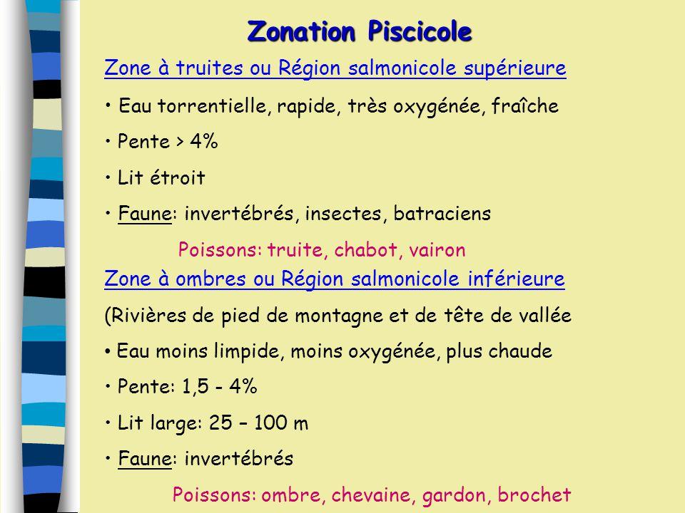 Zonation Ecologique Crénon (source) Rhéocrène, Limnocrène, Hélocrènes Rhitron (partie torrenticole) Pentes raides, courants vifs et débits faibles Fon
