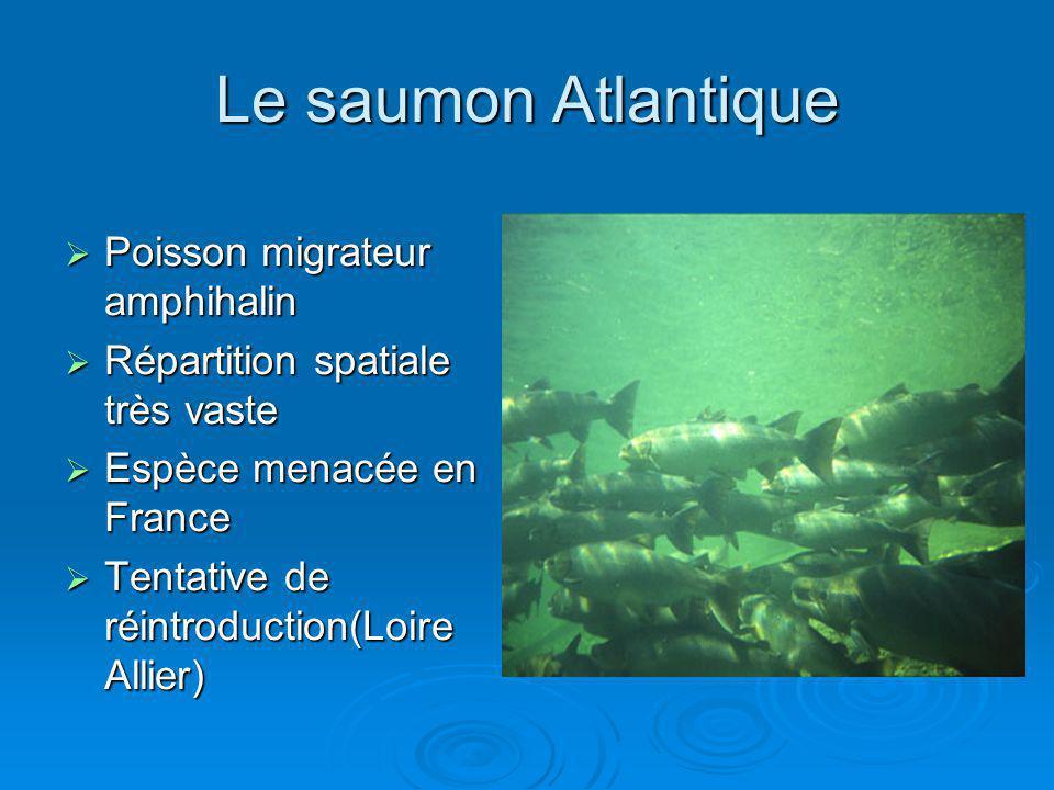 Le saumon Atlantique Poisson migrateur amphihalin Poisson migrateur amphihalin Répartition spatiale très vaste Répartition spatiale très vaste Espèce