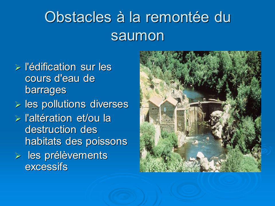 Obstacles à la remontée du saumon l'édification sur les cours d'eau de barrages l'édification sur les cours d'eau de barrages les pollutions diverses