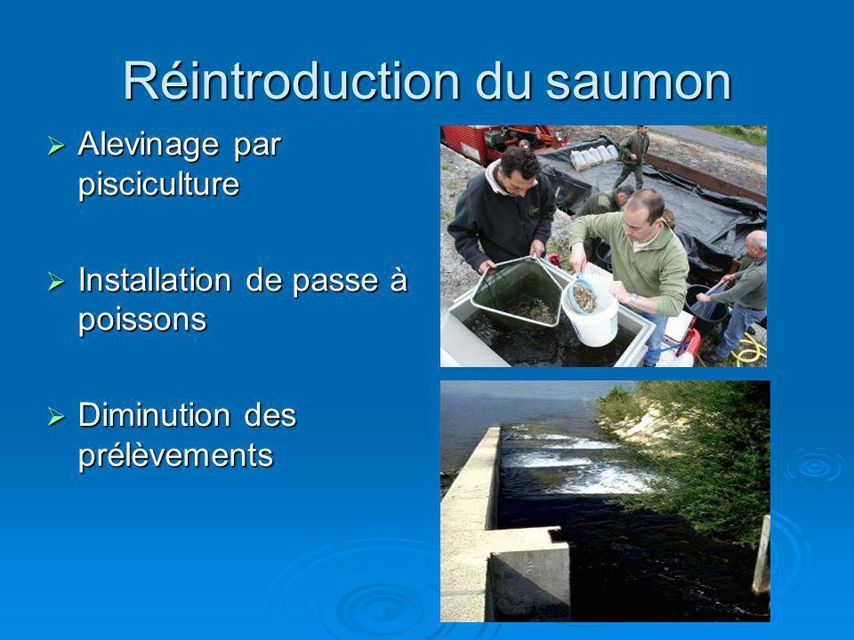 Réintroduction du saumon Alevinage par pisciculture Alevinage par pisciculture Installation de passe à poissons Installation de passe à poissons Dimin