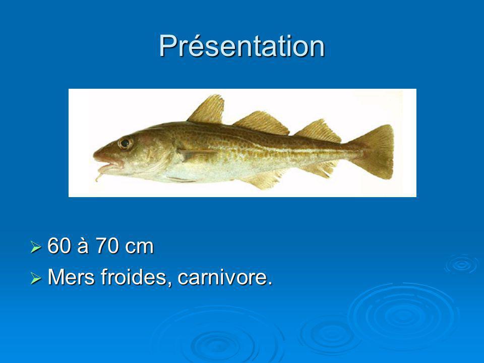 Présentation 60 à 70 cm 60 à 70 cm Mers froides, carnivore. Mers froides, carnivore.