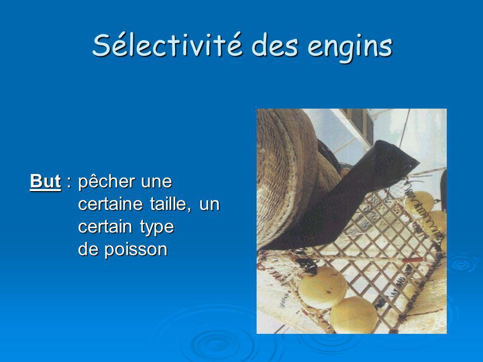 Biomasse Production Y:masse capturée ou exploitée f : effort de pêche q : efficacité dunité deffort de pêche B : biomasse moyenne par unité de temps Y = f*q*B