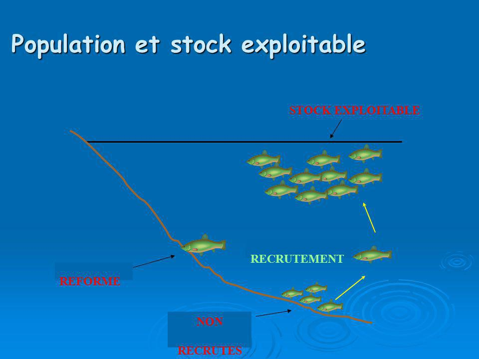 Population et stock exploitable REFORME NON RECRUTES RECRUTEMENT STOCK EXPLOITABLE