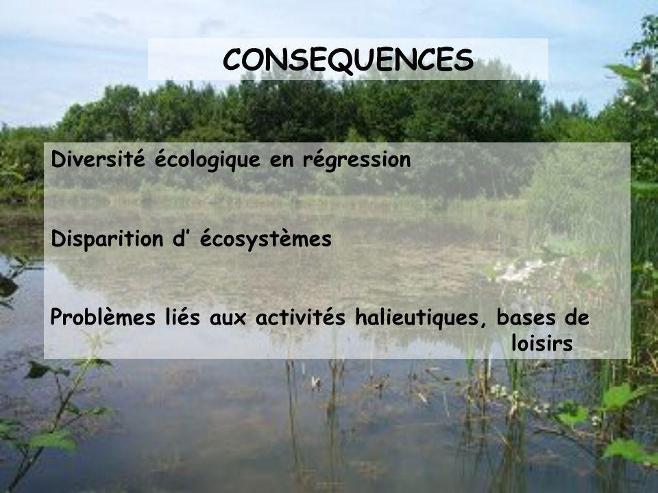 PROCESSUS D INVASION Occupation des niches écologiques : désertification par les espèces indigènes Compétition aux nutriments Productions de toxines E