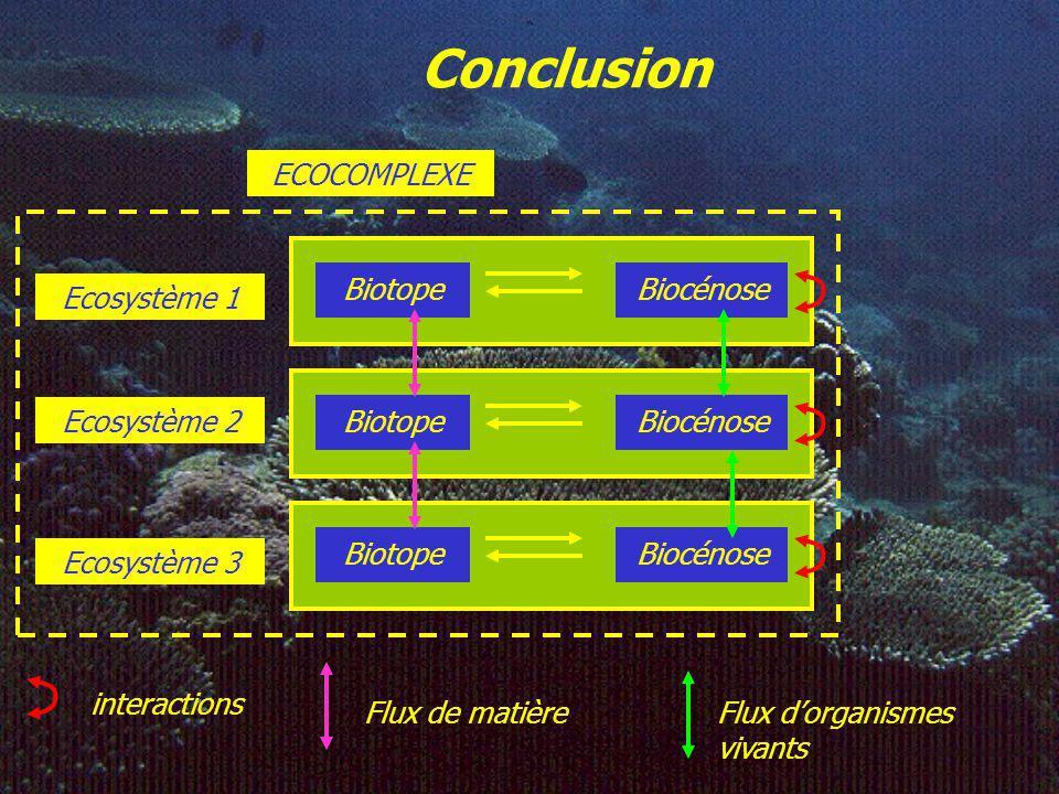 Discussion sur ECOPATH II Avantages du modèle 1.Logiciel simple à utiliser qui ne nécessite pas forcément la donnée de beaucoup de paramètres. 2.Effic