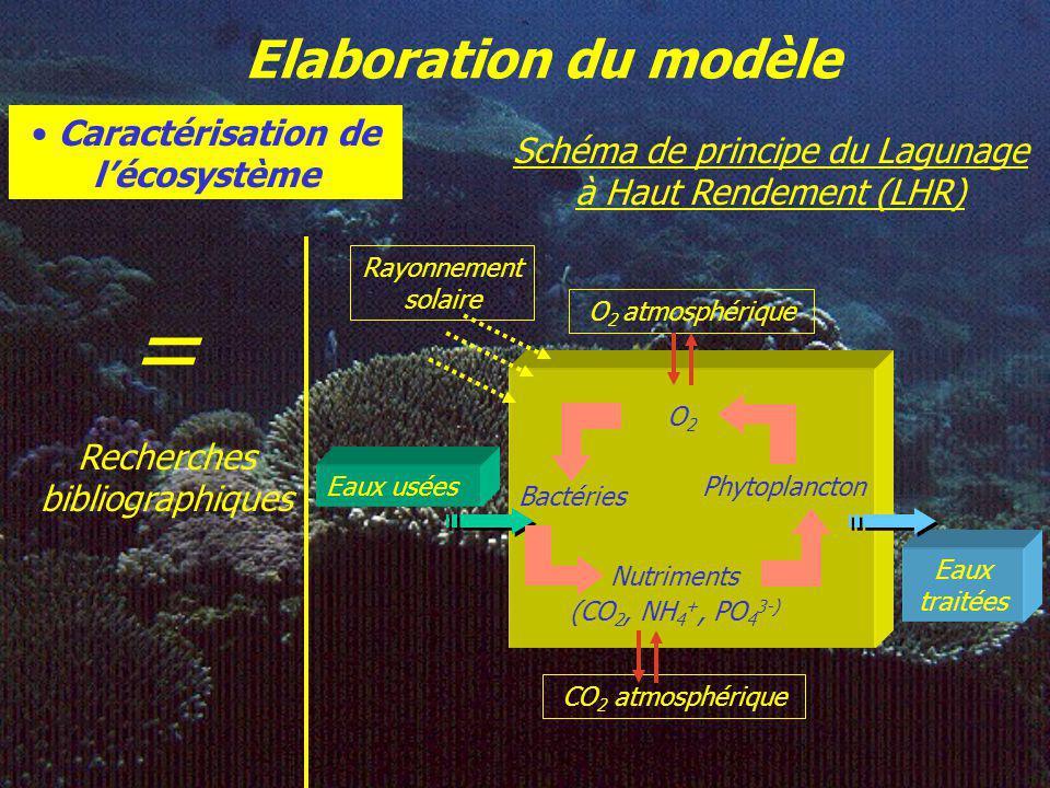 Elaboration du modèle Caractérisation de lécosystème = Recherches bibliographiques Schéma de principe du Lagunage à Haut Rendement (LHR) O2O2 Bactéries Phytoplancton Nutriments (CO 2, NH 4 +, PO 4 3-) CO 2 atmosphérique Eaux usées Eaux traitées O 2 atmosphérique Rayonnement solaire