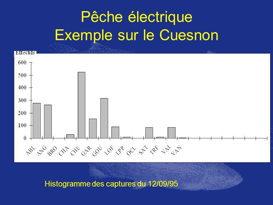 Pêche électrique Exemple sur le Cuesnon Histogramme des captures du 12/09/95