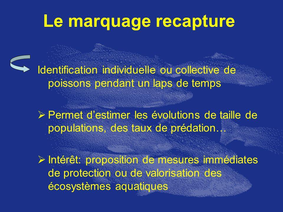 Le marquage recapture Identification individuelle ou collective de poissons pendant un laps de temps Permet destimer les évolutions de taille de popul