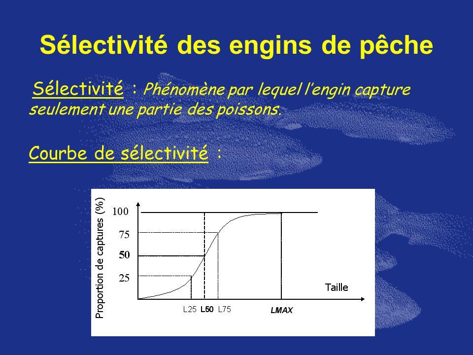 Sélectivité des engins de pêche Sélectivité : Phénomène par lequel lengin capture seulement une partie des poissons. Courbe de sélectivité :