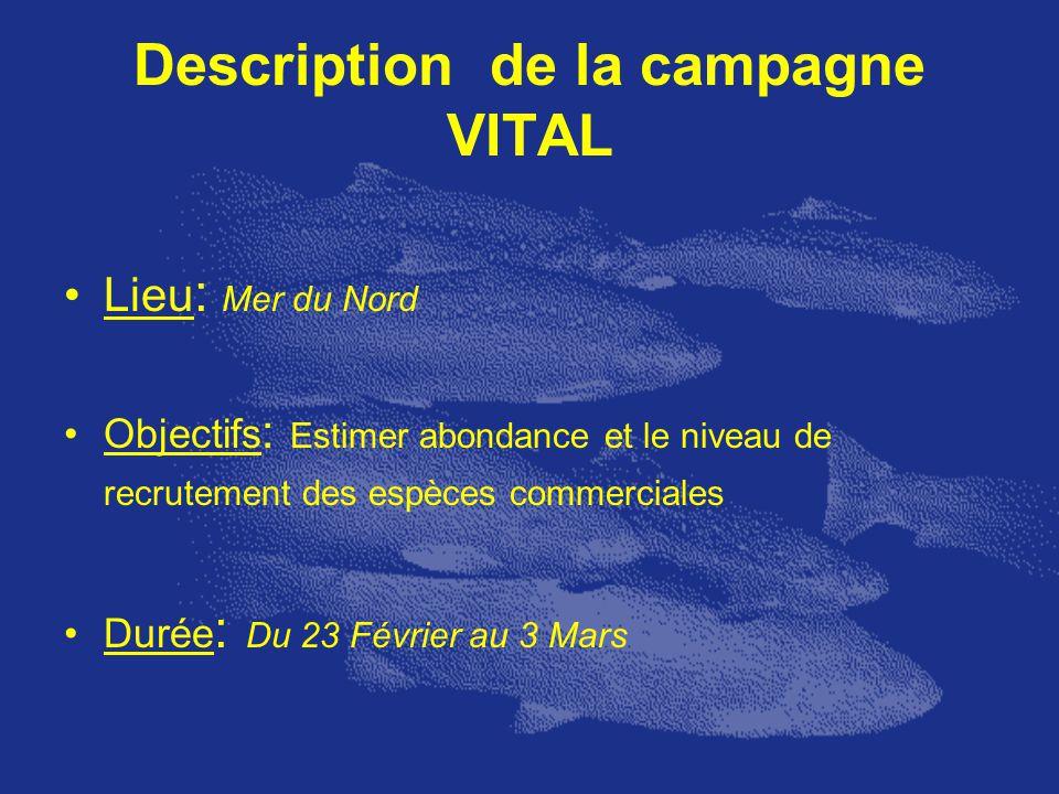 Description de la campagne VITAL Lieu : Mer du Nord Objectifs : Estimer abondance et le niveau de recrutement des espèces commerciales Durée : Du 23 F