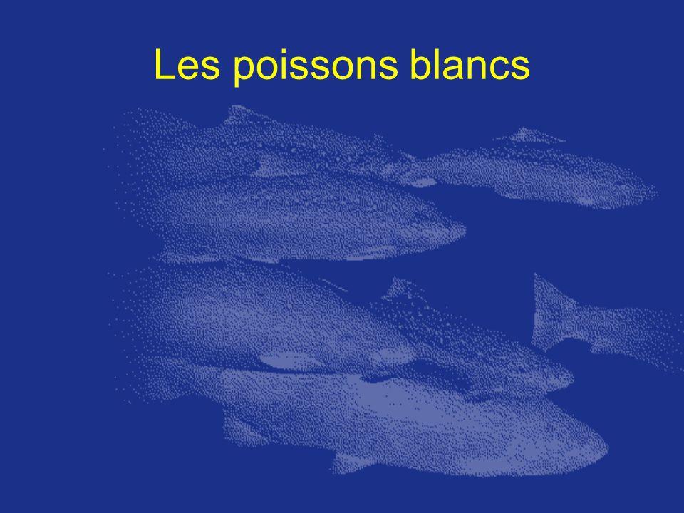 Les poissons blancs