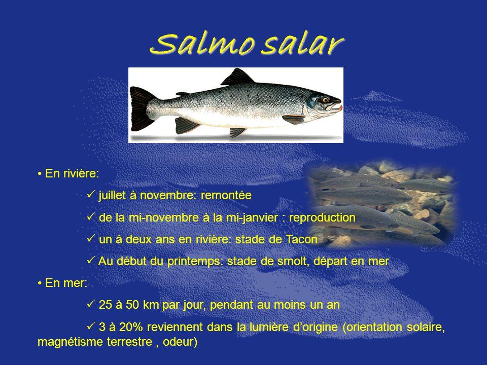 Salmo salar En rivière: juillet à novembre: remontée de la mi-novembre à la mi-janvier : reproduction un à deux ans en rivière: stade de Tacon Au débu