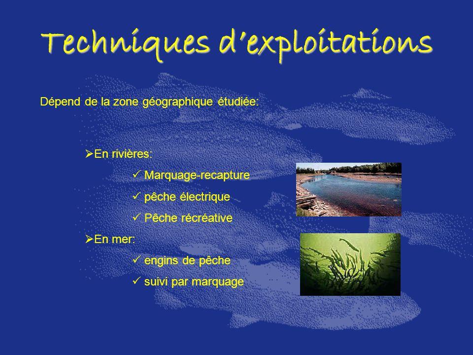 Techniques dexploitations Dépend de la zone géographique étudiée: En rivières: Marquage-recapture pêche électrique Pêche récréative En mer: engins de