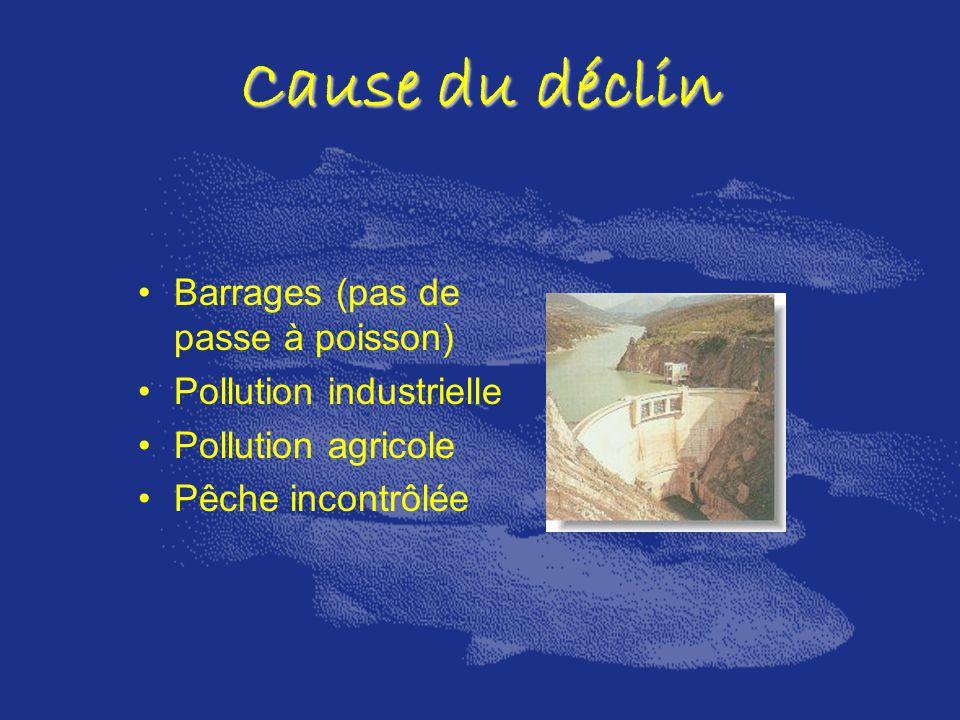 Cause du déclin Barrages (pas de passe à poisson) Pollution industrielle Pollution agricole Pêche incontrôlée