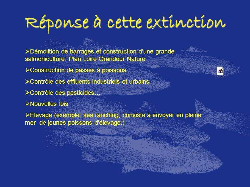 Réponse à cette extinction Démolition de barrages et construction dune grande salmoniculture: Plan Loire Grandeur Nature Construction de passes à pois