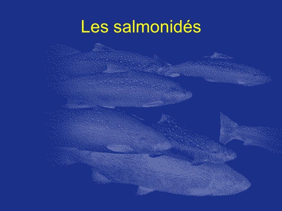 Les salmonidés