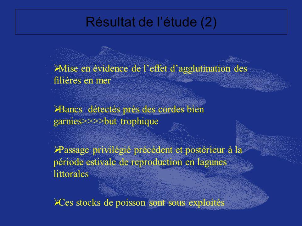 Résultat de létude (2) Mise en évidence de leffet dagglutination des filières en mer Bancs détectés près des cordes bien garnies>>>>but trophique Pass