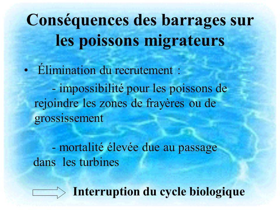 Conséquences des barrages sur les poissons migrateurs Élimination du recrutement : - impossibilité pour les poissons de rejoindre les zones de frayère