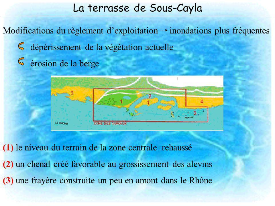 La terrasse de Sous-Cayla Modifications du règlement dexploitation inondations plus fréquentes dépérissement de la végétation actuelle érosion de la b
