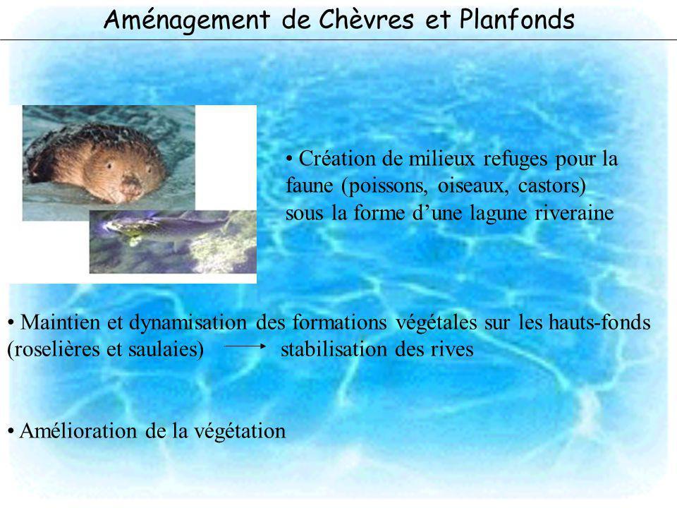 Aménagement de Chèvres et Planfonds Création de milieux refuges pour la faune (poissons, oiseaux, castors) sous la forme dune lagune riveraine Maintie