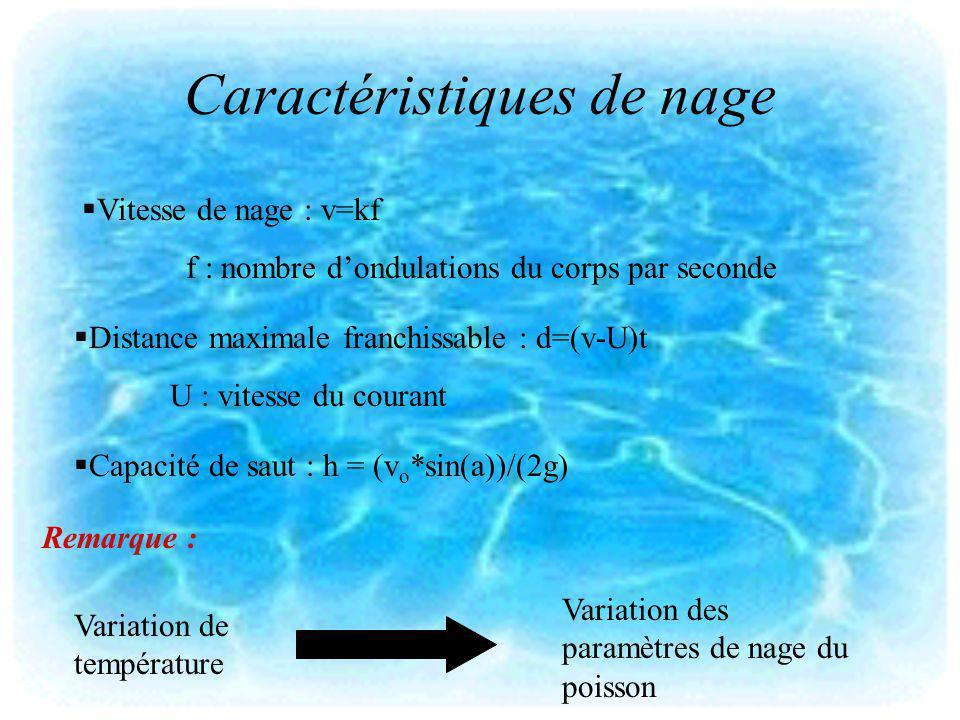 Caractéristiques de nage Vitesse de nage : v=kf f : nombre dondulations du corps par seconde Distance maximale franchissable : d=(v-U)t U : vitesse du