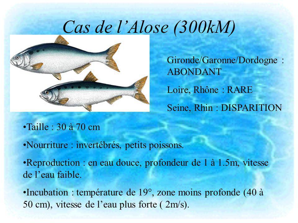 Cas de lAlose (300kM) Taille : 30 à 70 cm Nourriture : invertébrés, petits poissons. Reproduction : en eau douce, profondeur de 1 à 1.5m, vitesse de l