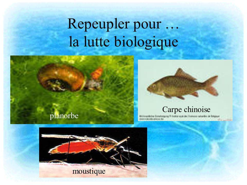 Repeupler pour … la lutte biologique planorbe moustique Carpe chinoise
