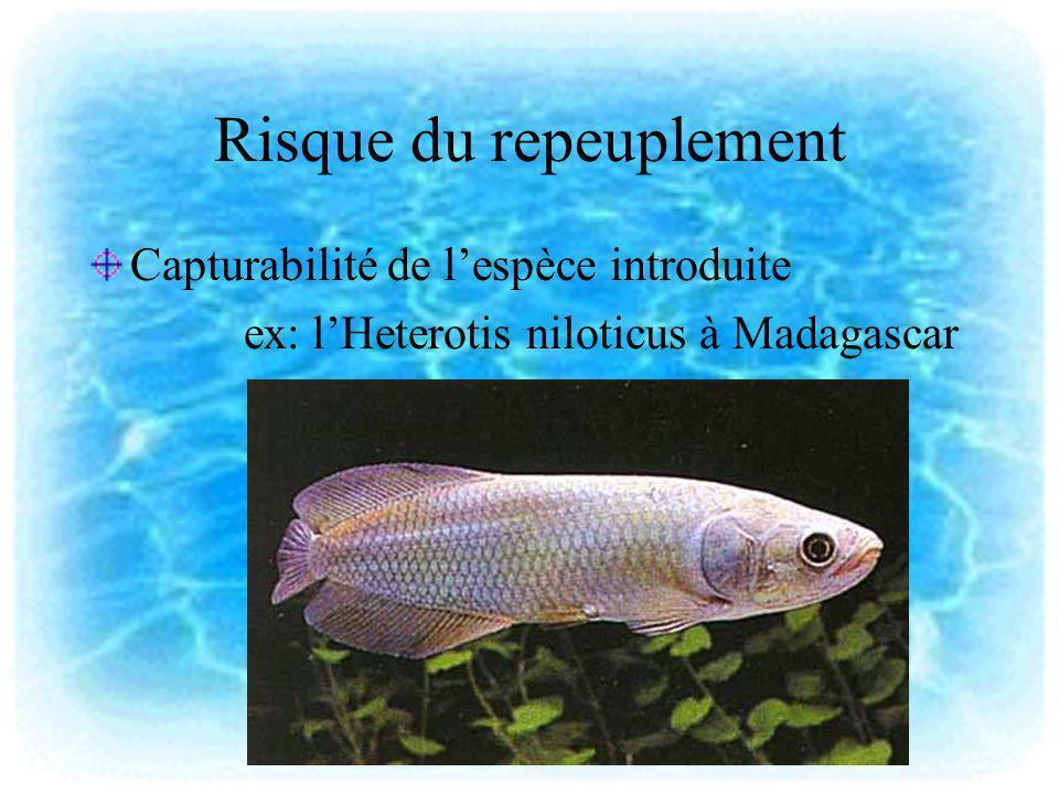 Risque du repeuplement Capturabilité de lespèce introduite ex: lHeterotis niloticus à Madagascar