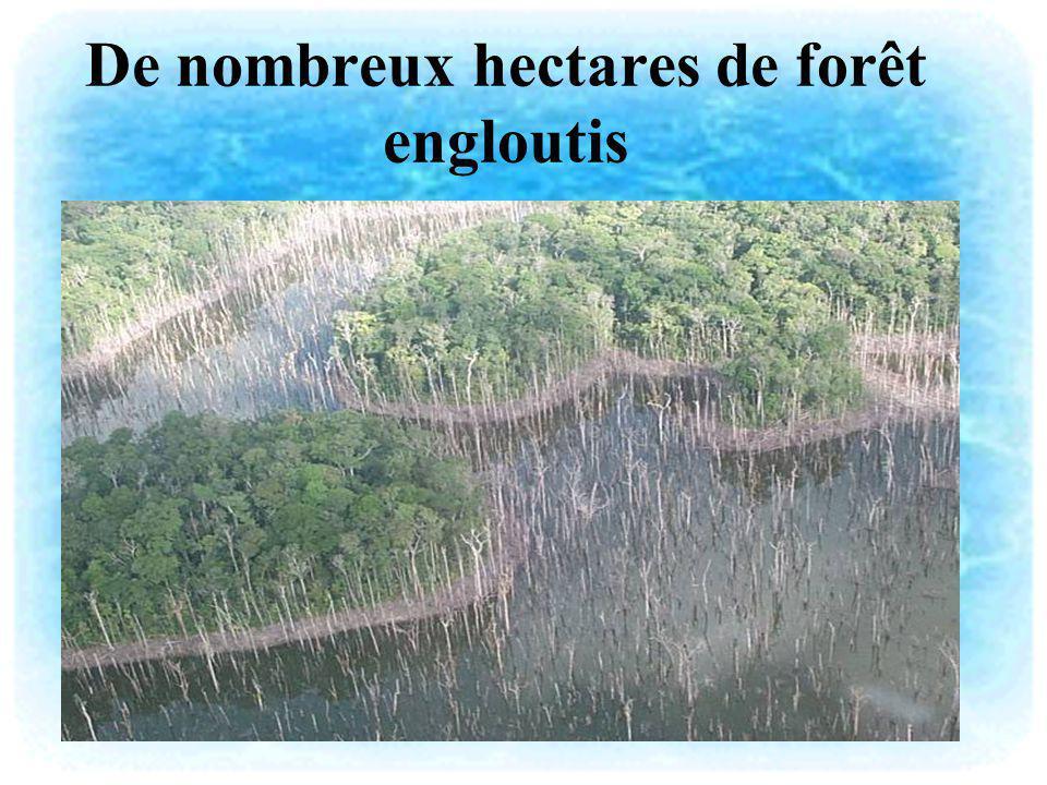 De nombreux hectares de forêt engloutis